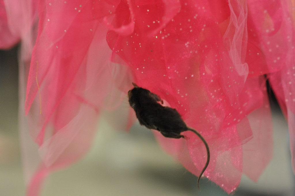 A mouse was discovere today on the pink bird costume recently used in the Suessical.