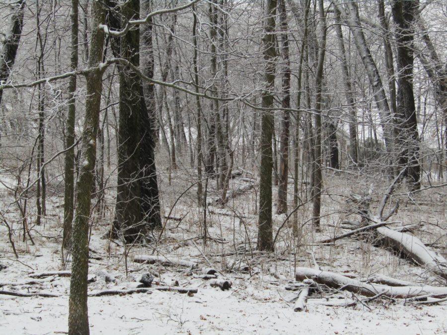 snow still coming down