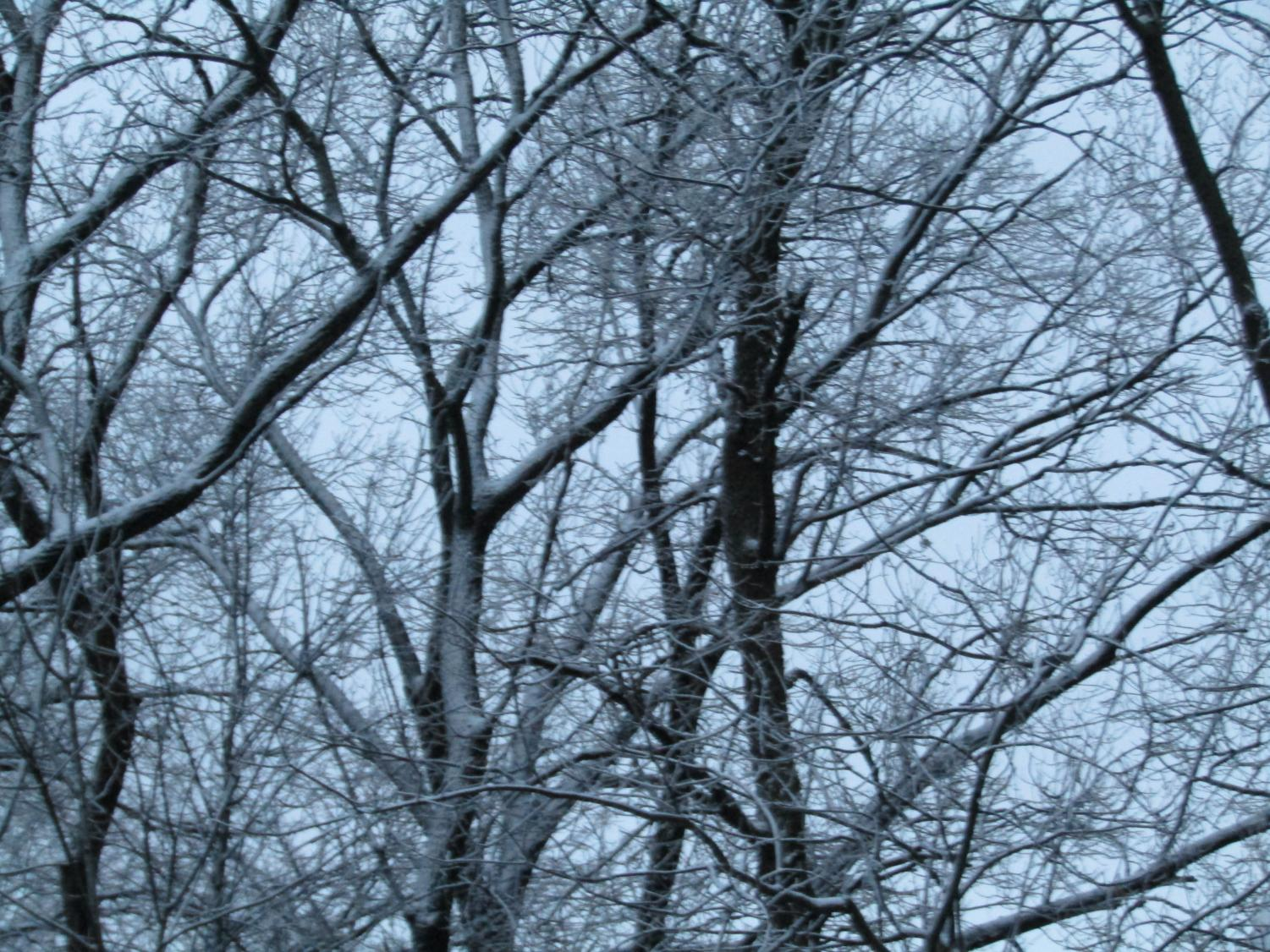Snow covered trees on a frosty night.