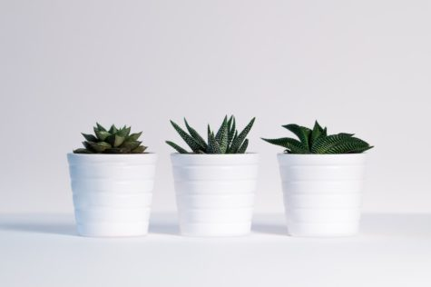 Incorporating plants into your personal space can have a positive impact in your well-being.