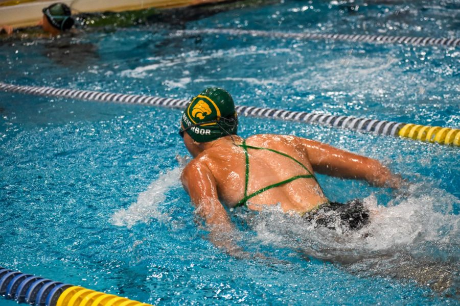 Diver Lacey Neighbor (JR) competing in the butterfly portion of an all-diver 200 Yard Medley Relay.